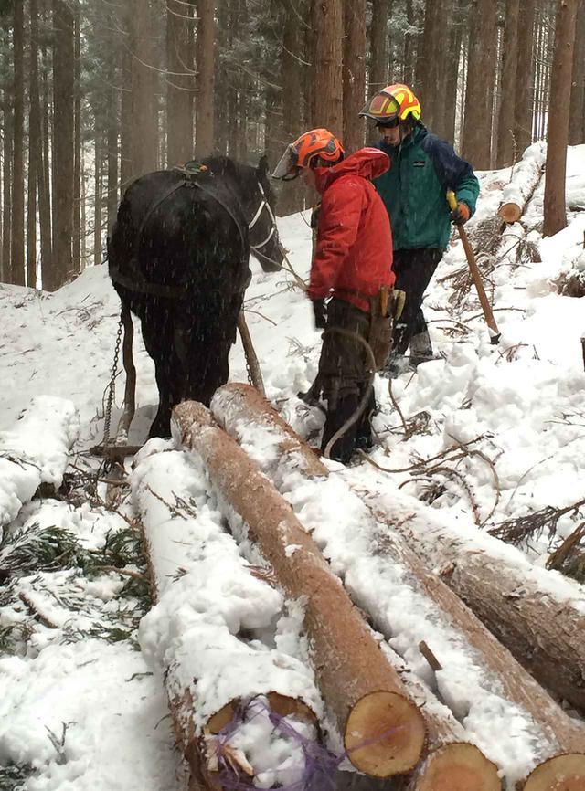 画像: 広い林道が作られていない山では、機械や車両が入れず木材の運搬に困難を来たす。そこで活躍するのが馬搬だが、その技を会得するには、5~10年の月日を要するという