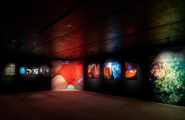 画像: 「MEP Studio(ヨーロッパ写真美術館)による5人の女性アーティスト展――フランスにおける写真と映像の新たな見地」HOSOO GALLERY ©︎ TAKESHI ASANO - KYOTOGRAPHIE 2021