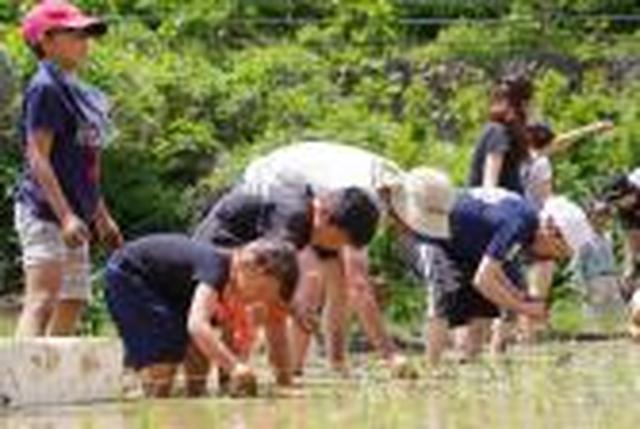 画像: 農に学べ!遊べ!お田植と小梅の収穫体験を募集