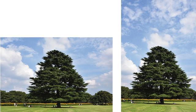 画像: 横画面では、左右に背景が写り込み、広さが感じられる。一方、縦画面は高さや奥行きの印象が強くなる。樹木や建物は縦画面のほうが収まりがよく、被写体や空の高さなども表現できる。