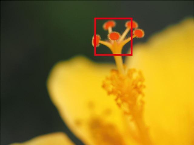 画像: 花のシベ先端にピントを合わせたい。だが、花やカメラの揺れでとらえきれない。ここは、「グループターゲット」が威力を発揮する場面だ。