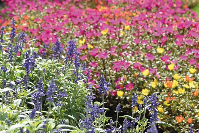 画像: 【ピント】▶「自動選択AF」だと、別の花にピント
