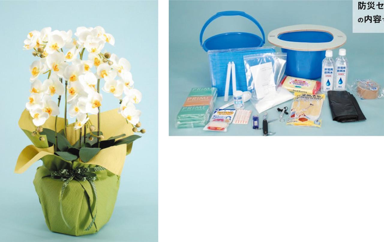 画像: 胡蝶蘭(TA-013=タスカルフラワー、実売価格例2万1800円)の鉢の中に防災セットを収納。鉢自体が簡易トイレになる(TG-011も同様)。