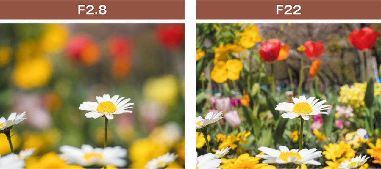 画像: 同じ風景でも絞りで印象が変わる。F2.8では、背景が大きくボケているので、ピントの合った花が引き立って見える。F22では、背景の花の形もわかるように写っている。