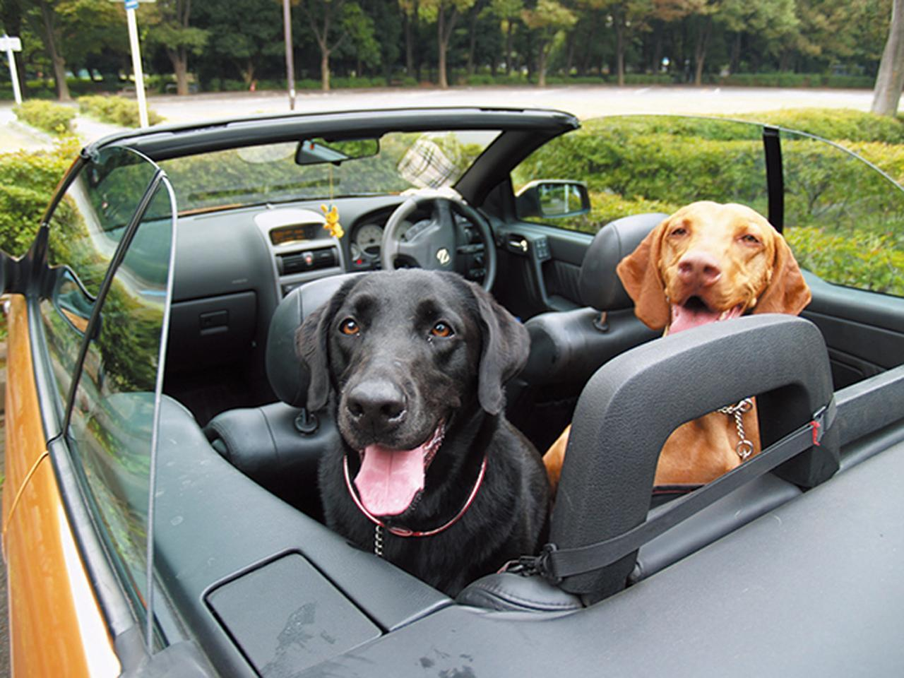 画像: ペットの擬人化もかわいらしさを感じやすい演出。車に乗せたり、小物を使ったりして、コミカルに。