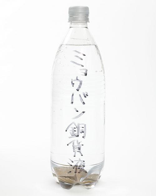 画像: ❸これだけで、「ミョウバン原液」が、殺菌性がいっそう強い「ミョウバン銅貨液」になる