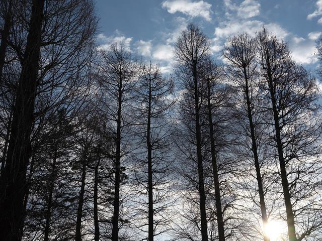画像: 中判ミラーレスの写りは、強い光が差し込んでも破綻しないダイナミックレンジの広さと高解像度が高い次元でバランスしている(GFX50Sで撮影)。