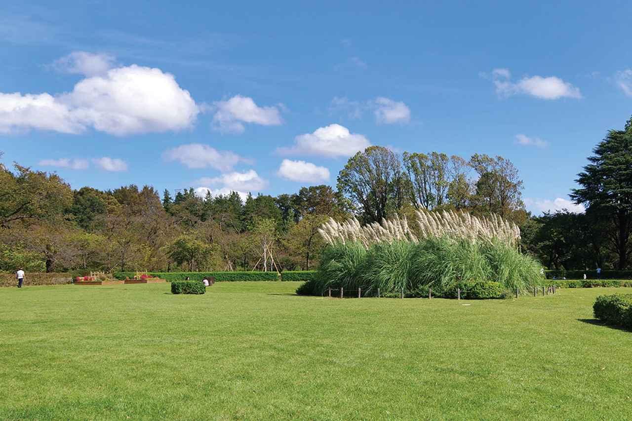 画像: 木々の緑と青空の組み合わせは魅力的な写真の要素になる