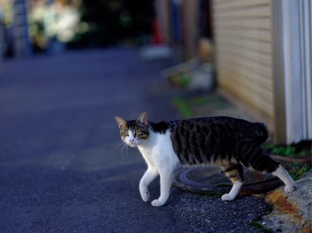 画像: 予期せず猫が家の間から出てきたので、思わずシャッターを切った。中判なのに、素早いAFとレスポンスのいい動きで、シャッターチャンスを逃さない。GF110㎜F2 R LM WR・絞り優先AE(F2・1/500秒)・WBオート・ISO100・JPEG