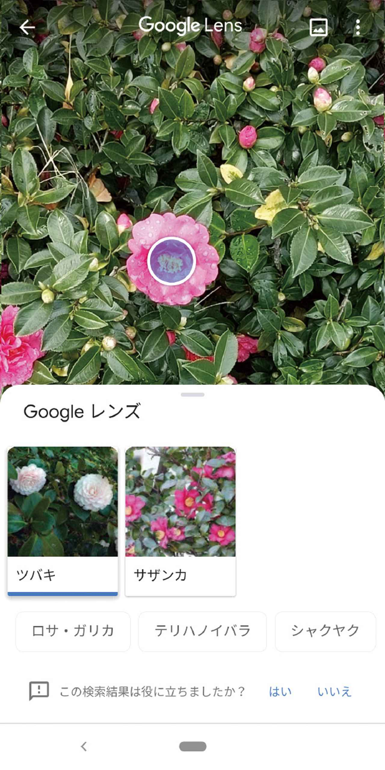 画像: 「Googleレンズ」機能により、カメラに写った物が何かを検索できる。外国語のメニューを翻訳することも可能。
