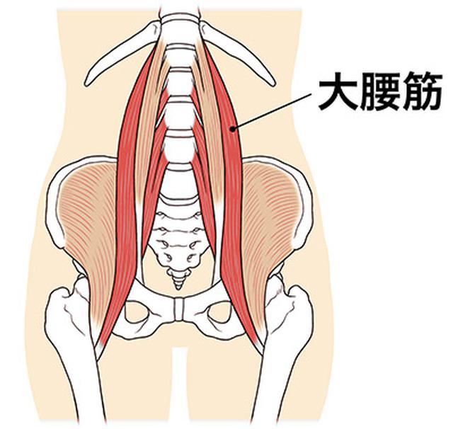 画像: 大腰筋は、上半身と下半身をつなぐ唯一の筋肉