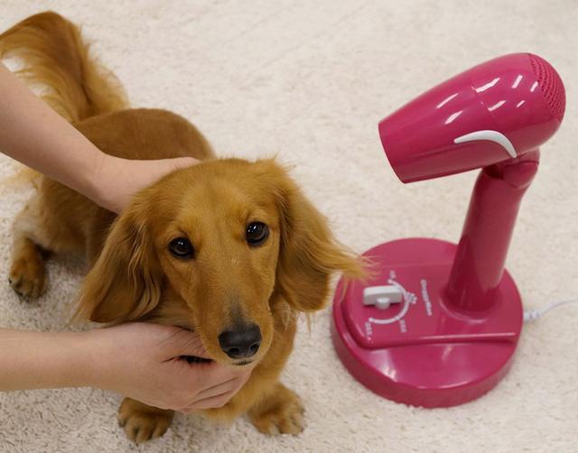 画像2: 【犬がドライヤーを嫌がる】犬派におすすめ!ペット用ドライヤー・スタンド6選