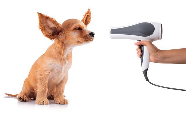 画像: 犬はドライヤーの音が苦手?