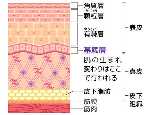 画像: 細胞に酸素をチャージし肌の生まれ変わりを促進