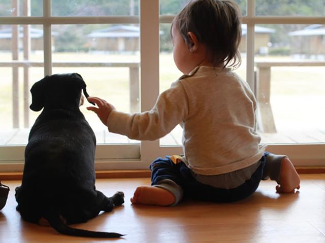 画像: ペットや子供、高齢の家族の見守りに需要が急増中
