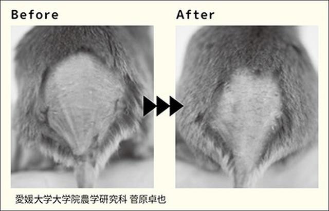 画像3: 【花粉症対策】目のかゆみやくしゃみに効果!みかんの皮とヨーグルトの組み合わせが最強