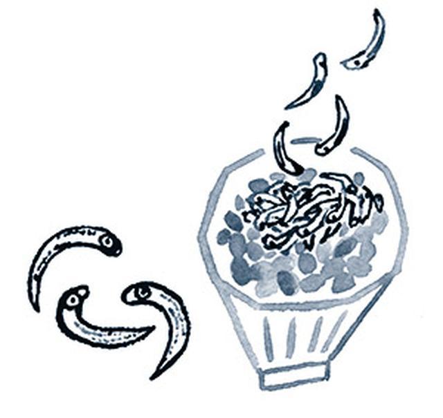 画像: ビタミンD摂取には、シラスやシシャモがお勧め! ビタミンDは、魚の内臓に豊富。シラスを納豆やサラダにかければ、手軽に食べられる。 ※同じものを、1週間食べ続けずに、2日間は別のものにする