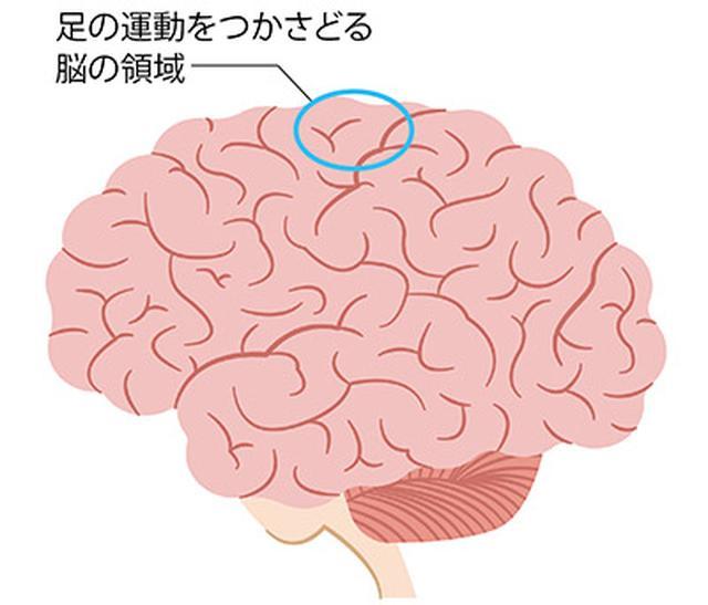 画像: 足の運動をつかさどる脳の領域は、脳の中心部に近いところにあり、足の裏もみで脳の血流がよくなると、脳の全体の活動にプラスに働く
