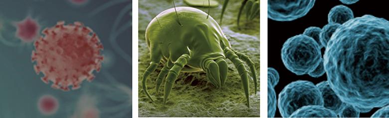 画像: フローリングには、目には見えないさまざまなハウスダストや雑菌が付着している。写真は、左から花粉、ダニ、細菌。