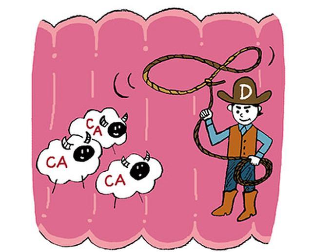 画像: サバ缶に含まれるビタミンDは、腸内でカルシウムをキャッチし吸収させる。だから、効率よく骨が強くなる!