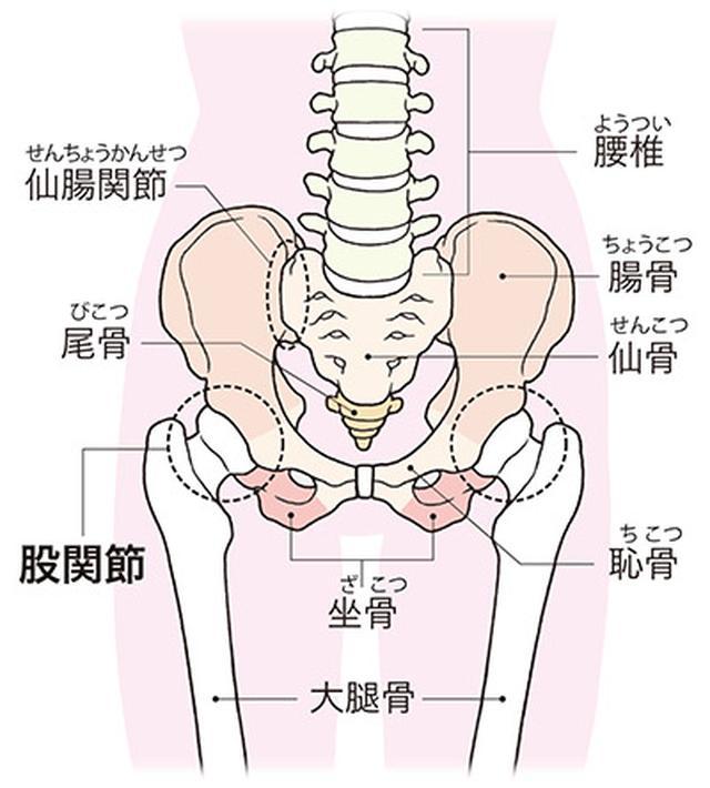 画像: 骨盤と股関節の位置