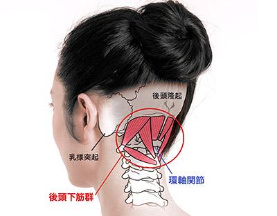 画像: 後頭下筋群は頭蓋骨と環椎・軸椎をつないでいる深層筋