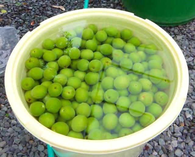 画像1: 【梅肉エキスの作り方】効果・効能は?薬草コンサルタントが伝授する最高峰の梅レシピ