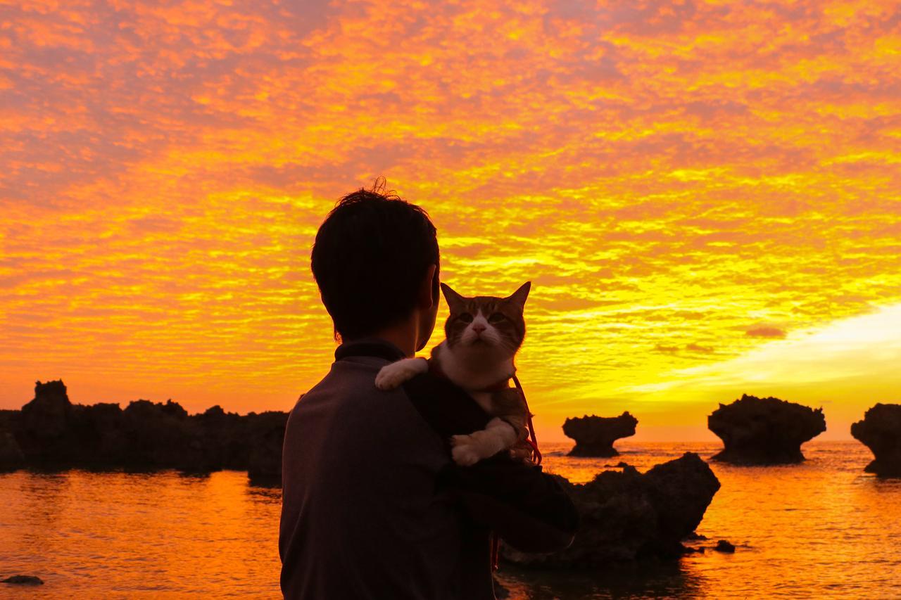 画像: 夕暮れをバックにした逆光写真の好例。 出典/旅にゃんこ だいきち&ふくちゃん