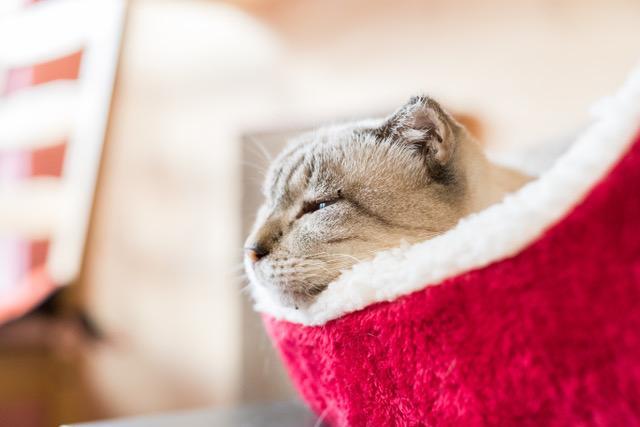 画像: ★「保護猫セミナー&THEペット法塾」