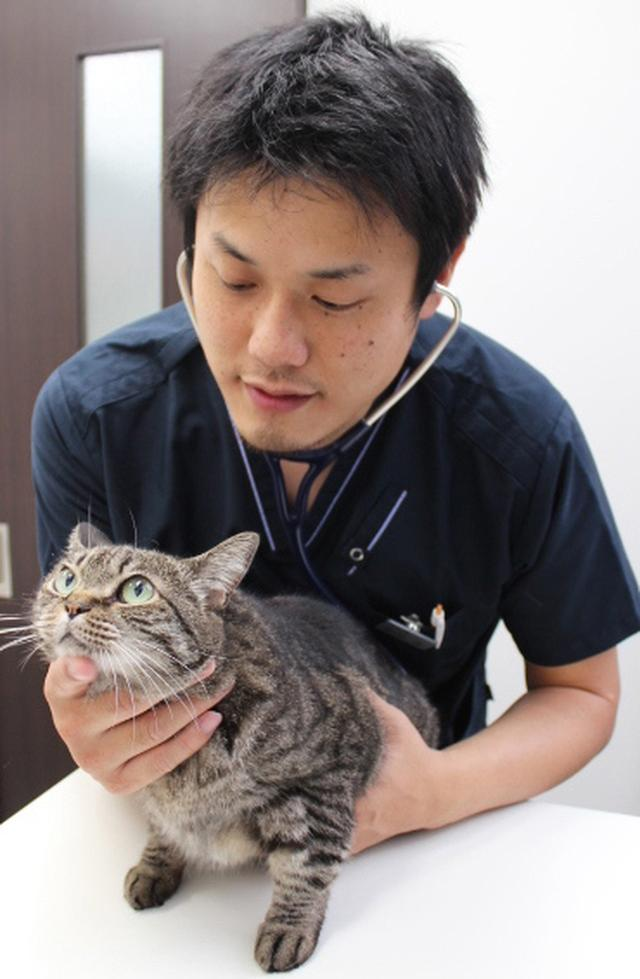 画像: ★猫専門獣医師・服部幸さんのねこセミナー