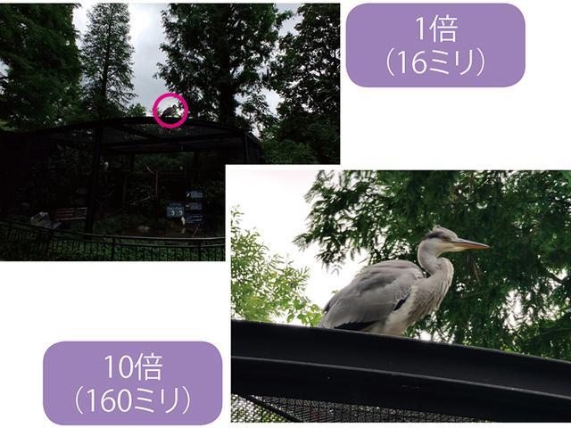 画像: 三つのレンズが連動し、35ミリ換算で16~160ミリのハイブリッドズームを実現。1倍ではわかりにくい遠くの鳥(円内)も、10倍ならくっきり写る