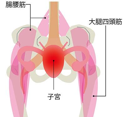 画像: 骨盤の周囲は大きな筋肉群で囲まれている 骨盤周りの筋肉が冷えて固まると子宮も冷え、さまざまな不調を起こす