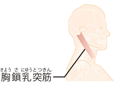 画像: 首のコリをほぐすとさらに効果がアップ!