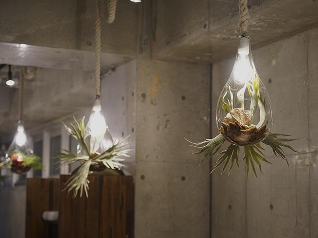 画像: 植物のアクセントが落ち着く空間を演出。