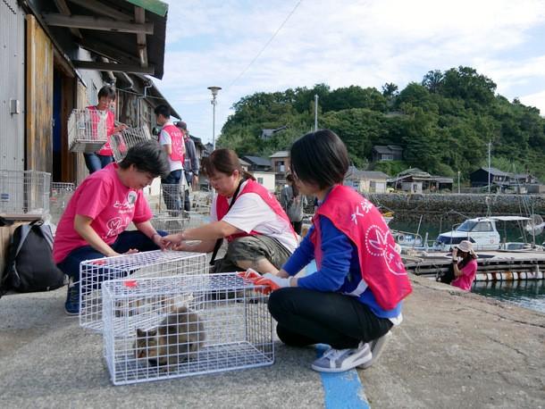 画像: 2018年に実施した青島さくらねこ一斉TNRでの捕獲の様子