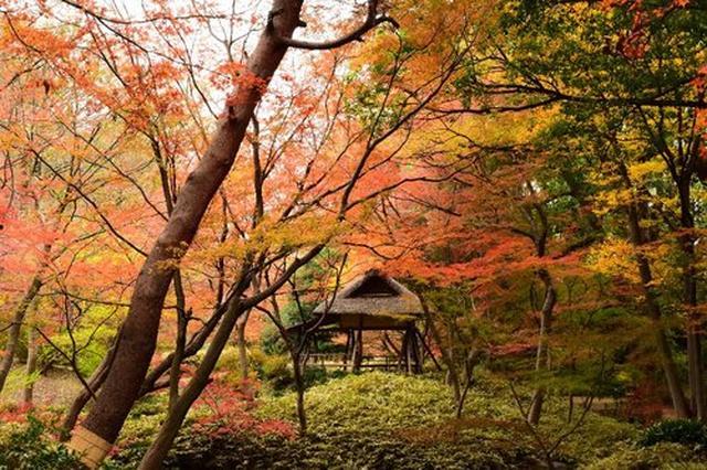 画像: 【六義園】「紅葉と大名庭園のライトアップ」開催決定!|六義園|公園へ行こう!