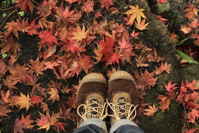 画像: 落ち葉も紅葉なら写真映えする