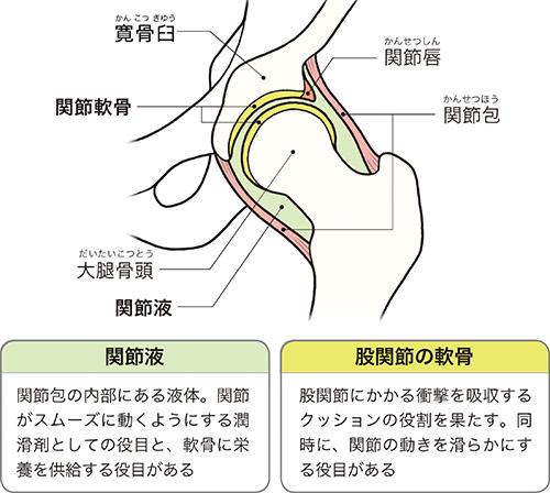 画像1: 【変形性股関節症の保存療法】ジグリングのやり方 貧乏ゆすりが痛みの軽減や軟骨再生の可能性も期待できる
