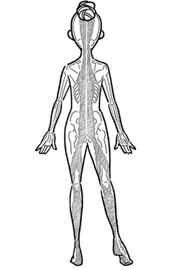 画像: グレーのところが筋膜。頭から足裏までつながっているのがわかる。