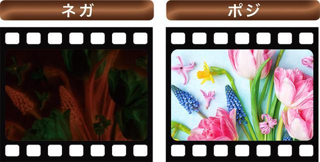 画像2: 【フィルムカメラ】が今人気!ネガ・ポジの違い、サイズや発色について知っておこう