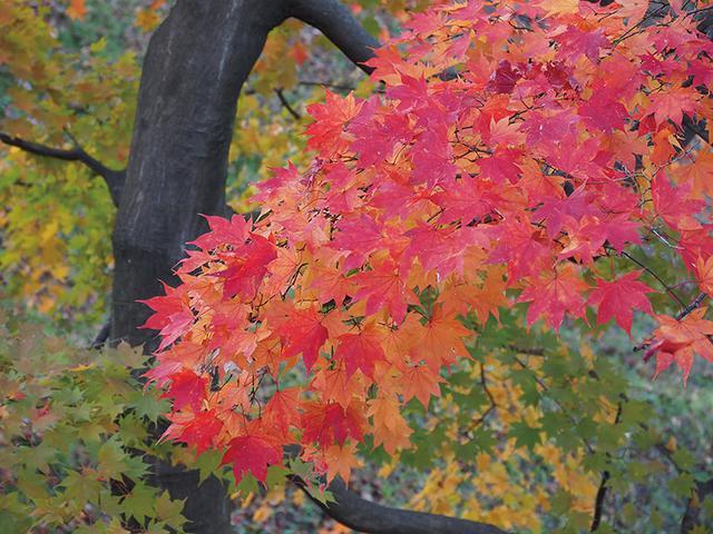 画像: 真っ赤な紅葉の枝が目を引く風景。その色をクッキリ撮って強調するため、PLフィルターを使用した。