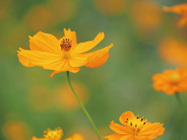 画像: 最近のカメラの追尾AF機能は、とても高性能。大きく揺れる花もみごとに追尾した。