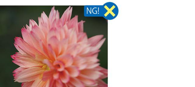 画像: 奥の花弁にピントを合わせると、手前の花弁が大きくボケて、全体的にピンボケの印象。