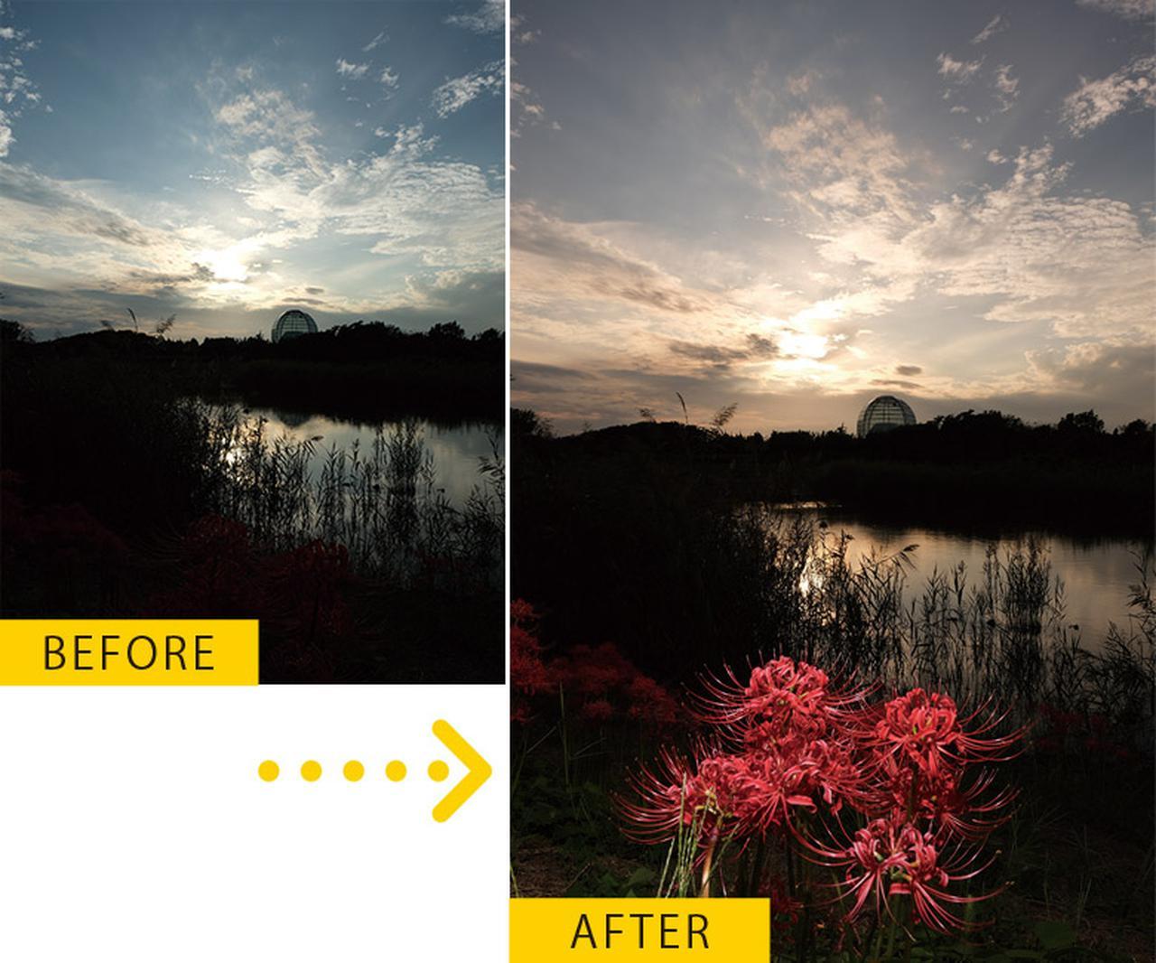 画像: ホワイトバランスを「曇り」に設定すると、夕焼けらしい色合いの写真になった。ストロボで浮かび上がらせたヒガンバナも、その赤みが強調されている。