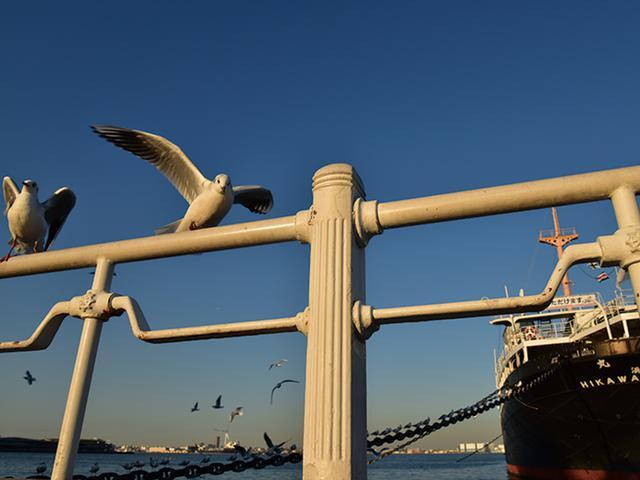 画像: 貨客船の周囲を飛び回るたくさんのカモメたち。そのうちの1羽が、近くの手すりに止まった瞬間をとらえた。