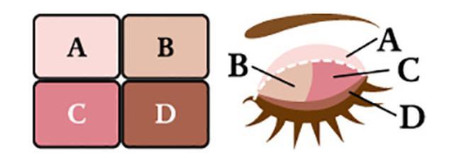 画像: A:ベースカラー まぶたの色がワントーンアップするように調色。少し肌の色が透けるような、うすいヴェールのようなイメージ。 B、C:メインカラー パール感は共通ではなく、その色にあったパール感に調整。マットはありません。 D:ラインカラー しっかり締まる色にするため、A、B、Cよりもツヤ感と柔らかさを抑えた処方にし、より高発色に。