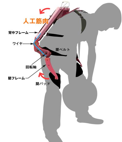 画像: 人工筋肉のアシスト動作の仕組み 背中の人工筋肉は、肩と腿で体と固定され、腰の位置にある回転軸を中心に、体を伸ばす方向(持ち上げ側)に補助力を出す。