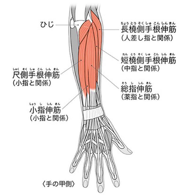 画像: 手の甲や指をほぐしひじや前腕を緩める