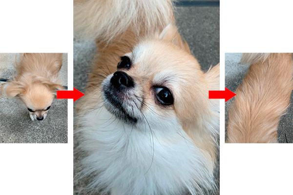 画像2: 目指せ! 〝SNS映え〟 スマホ写真術 スナップ