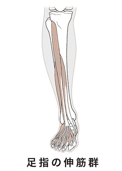 画像2: 【多裂筋のストレッチ】やり方は簡単!腰痛の改善には筋肉の「しつけ」が大切